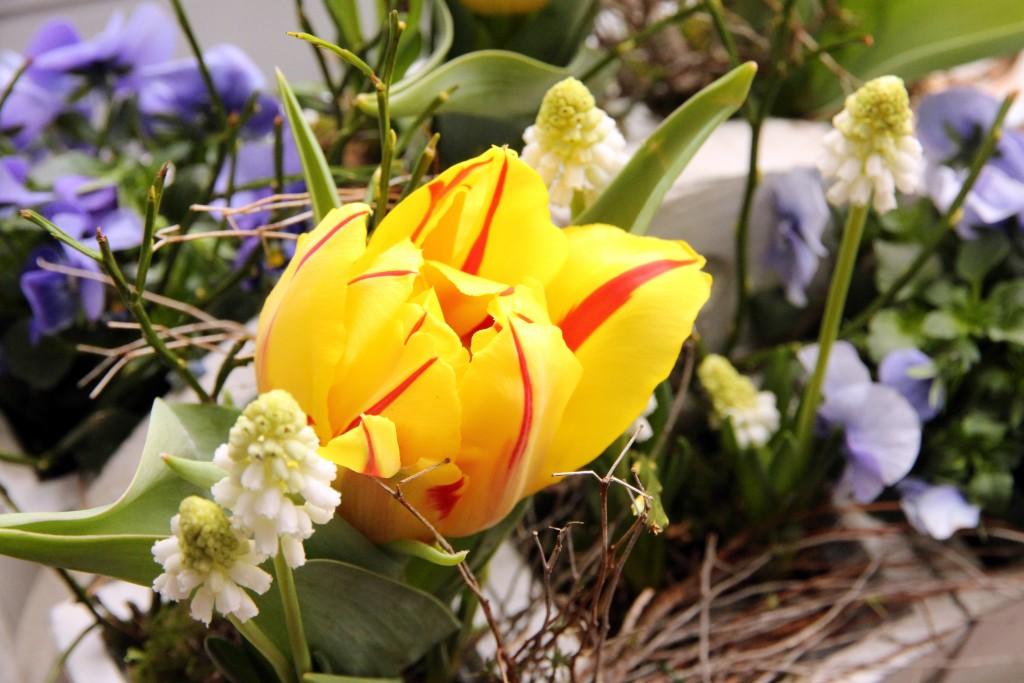 Die Fensterbank mit Tulpen