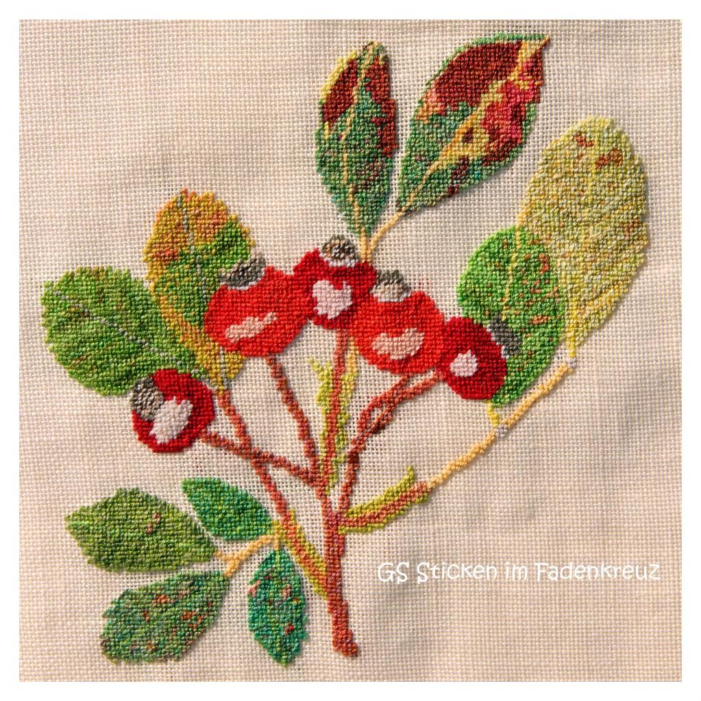 Knallrote Hagebutten und herbstlich verfärbte Blätter - eine perfekte Umsetzung