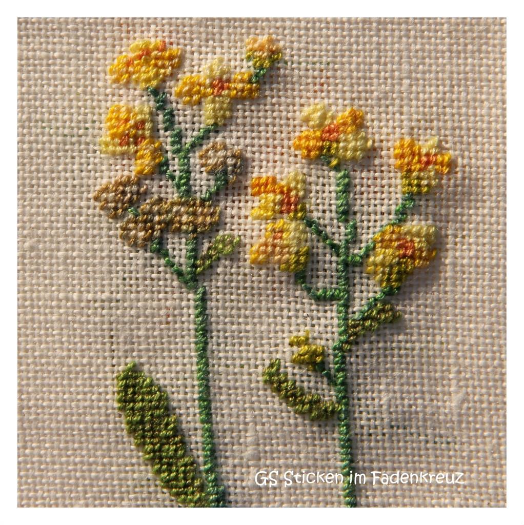 Blüte des Glatten Brillenschötchen